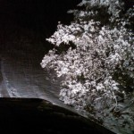 Snow at Mule 1